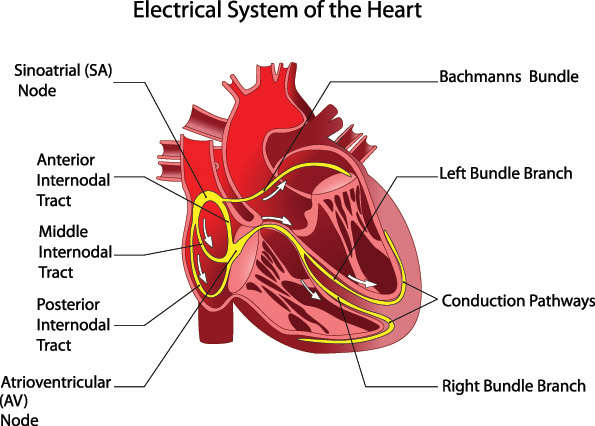 Atrial fibrillation natural treatment with chinese medicine some people have this medical problem but are unaware that they have a fast and irregular heartbeat an accurate pulse reading in chinese medicine can fandeluxe Gallery